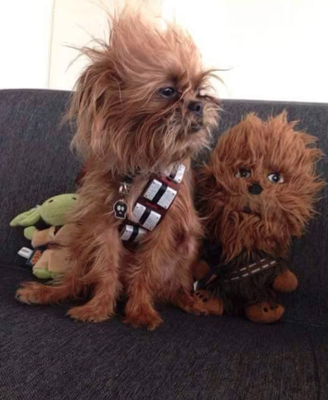 star-wars-dog-edition3