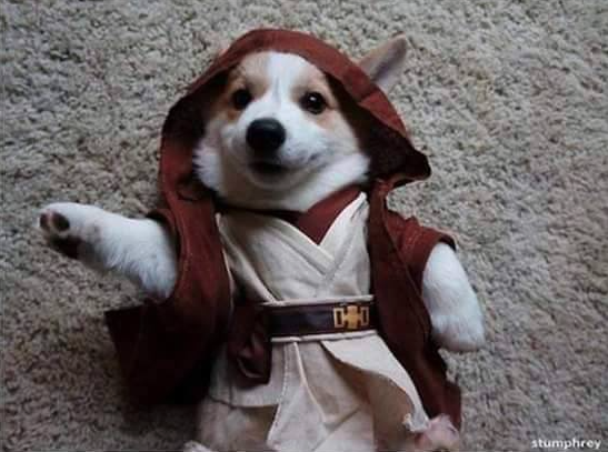 star-wars-dog-edition4