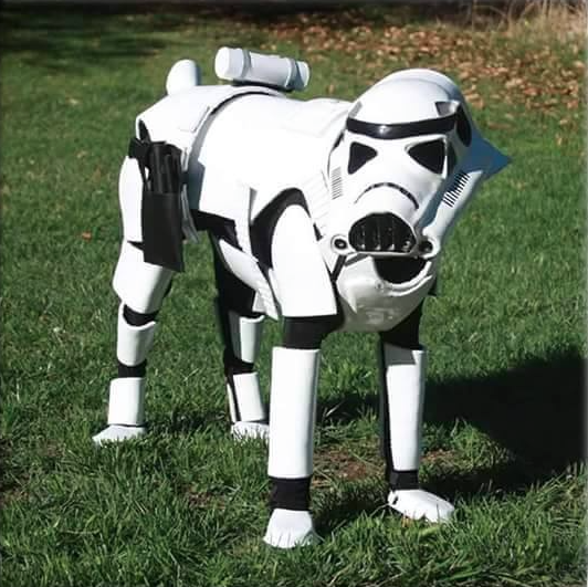 Look Star Wars Dog Edition Will Make Your Day When In Manila