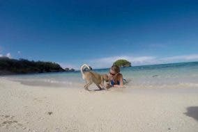 Buddy Luckiest Dog in the World Stray Dog in Boracay Gets Adopted by Foreign Traveler — Now Lives in Germany!