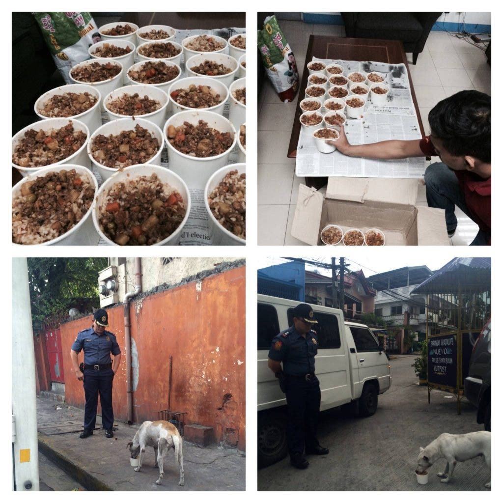 Police feeding stray dogs
