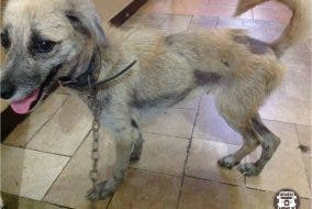 Help Michiko starving puppy needs help 3