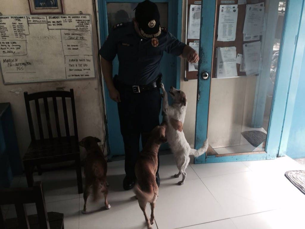 Jaime Osit Santos Policeman feeds stray dogs