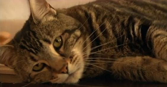 cat saved son in bakersfield
