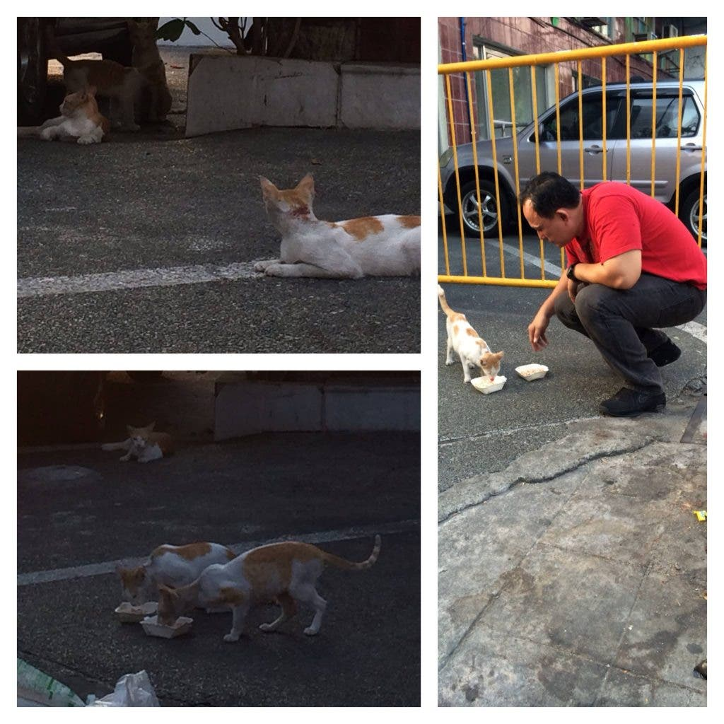 policeman feeds cats