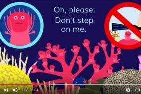 """""""The Coral Song"""" Video Perfectly Explains Why You Shouldn't Step on Corals"""