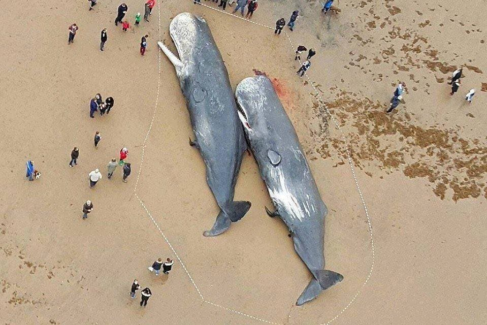 LOOK Beached Whales Reveal That Their Stomach Was Full of Plastic