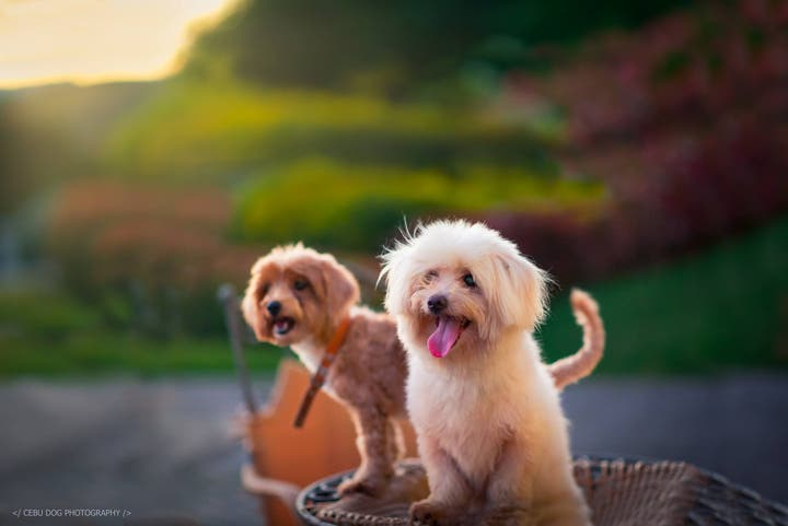 Say-Cheese-5-Pet-Photographers-in-the-PH-11