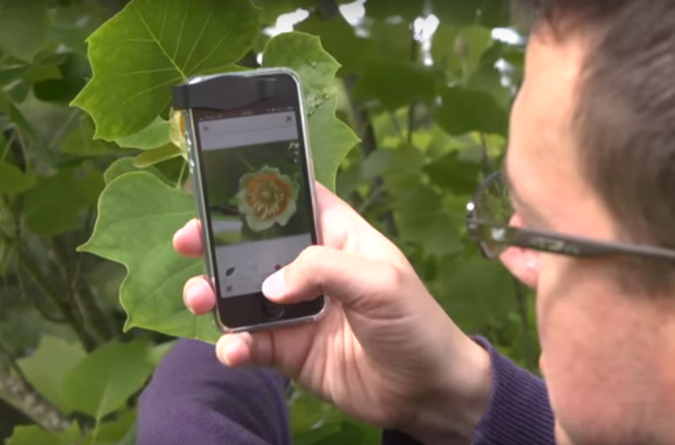 You Can Now Use Your Phone to Identify Plants