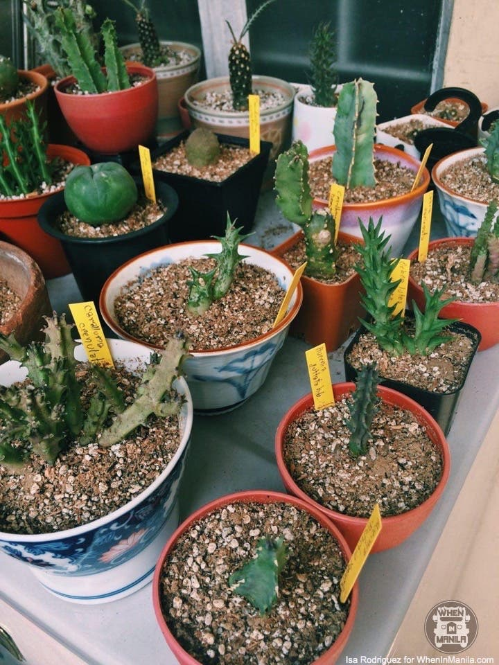 taking-care-of-cacti-photo_2016-06-20_15-30-06