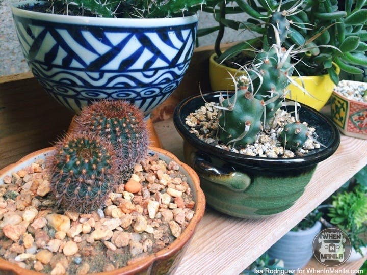 taking-care-of-cacti-photo_2016-06-20_15-30-13