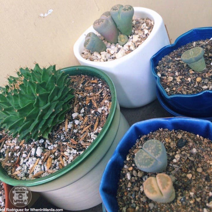 taking-care-of-cacti-photo_2016-06-20_15-30-21