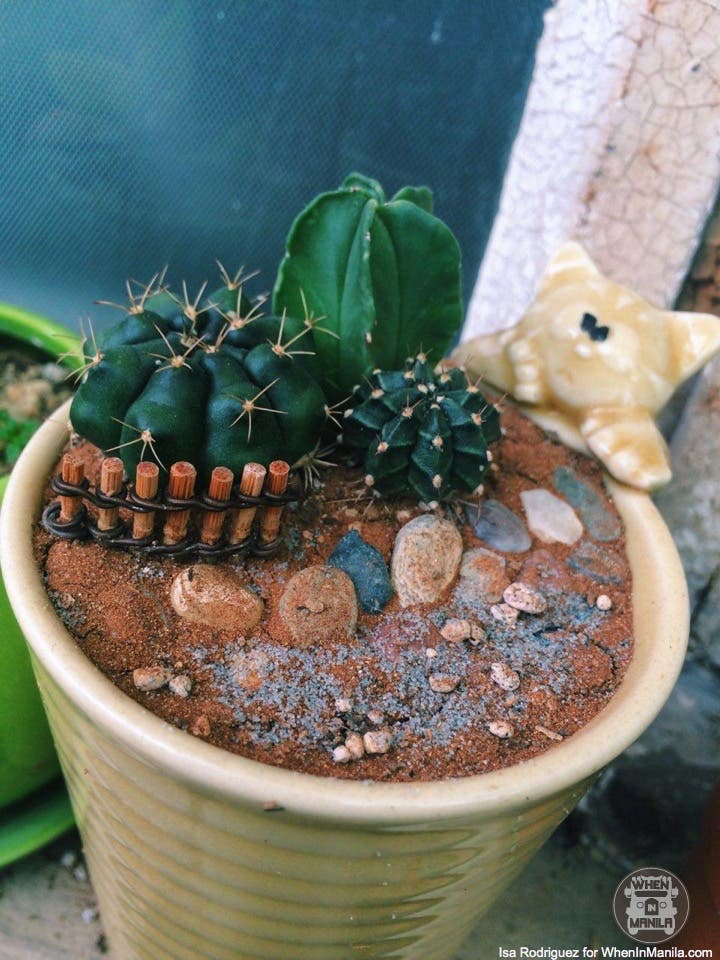 taking-care-of-cacti-photo_2016-06-20_15-30-27