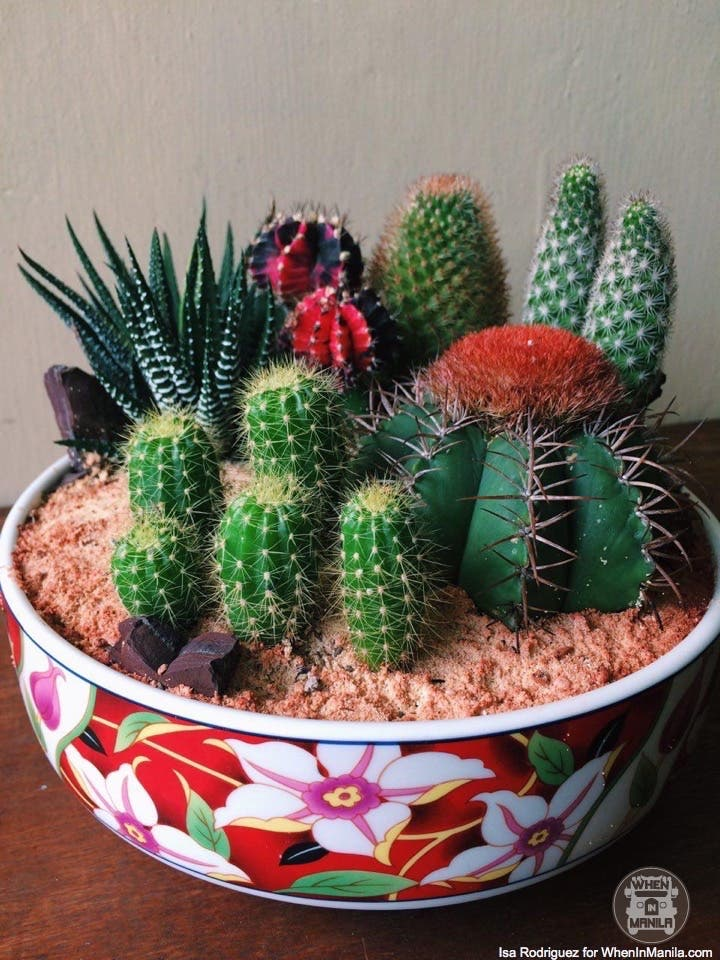 taking-care-of-cacti-photo_2016-06-20_15-30-42
