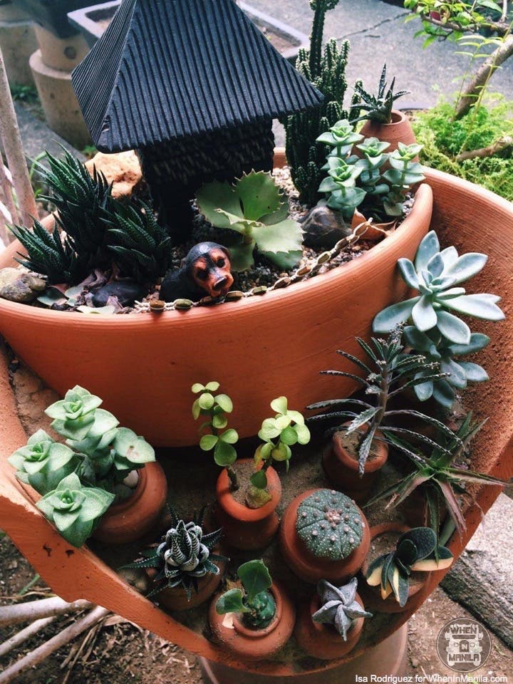 taking-care-of-cacti-photo_2016-06-20_15-30-44