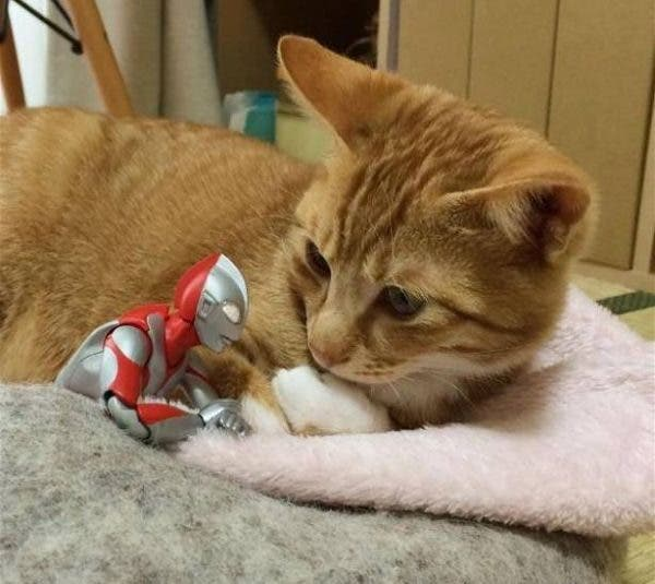 Photos of Ultraman and a Kitten as Best Friends Will Melt Your Heart
