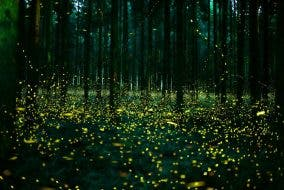LOOK: Magical Firefly Photos of a Japan in Summer