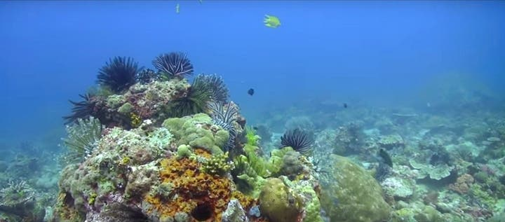 Discover Scuba Diving with Seaquest in Panglao Island, Bohol
