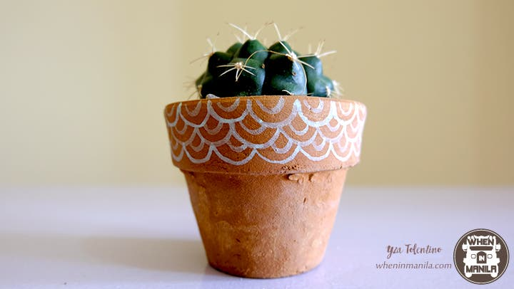 3 Reasons Why Succulents Are The Perfect Souvenirs 2