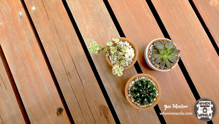 3 Reasons Why Succulents Are The Perfect Souvenirs 5