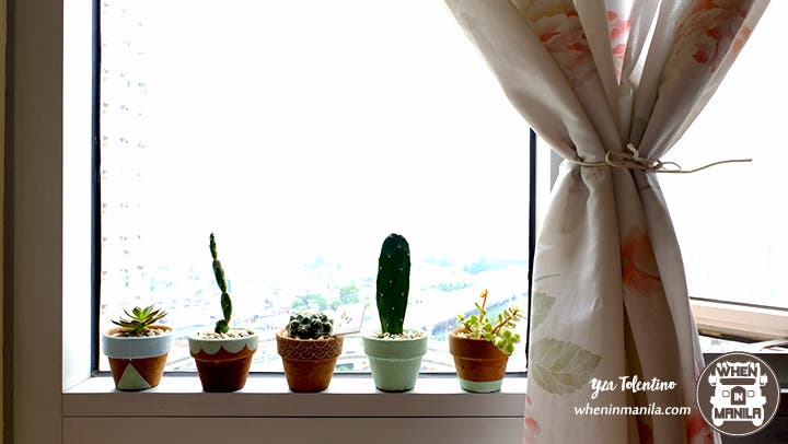 3 Reasons Why Succulents Are The Perfect Souvenirs 6
