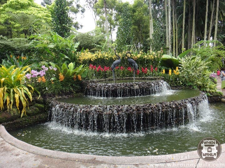 The National Orchid Garden SG (2)