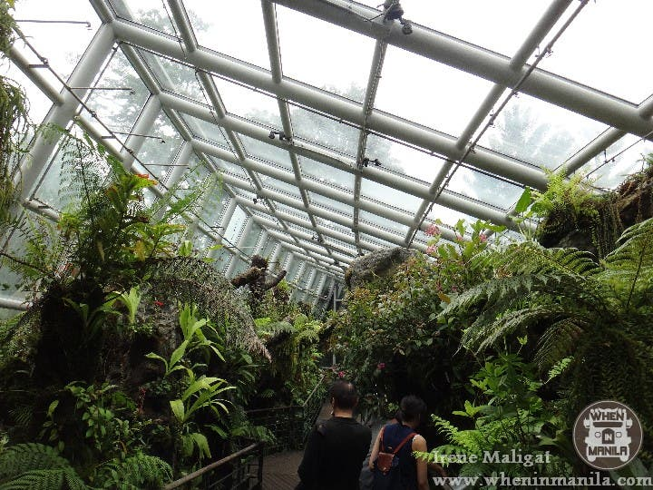 The National Orchid Garden SG (5)