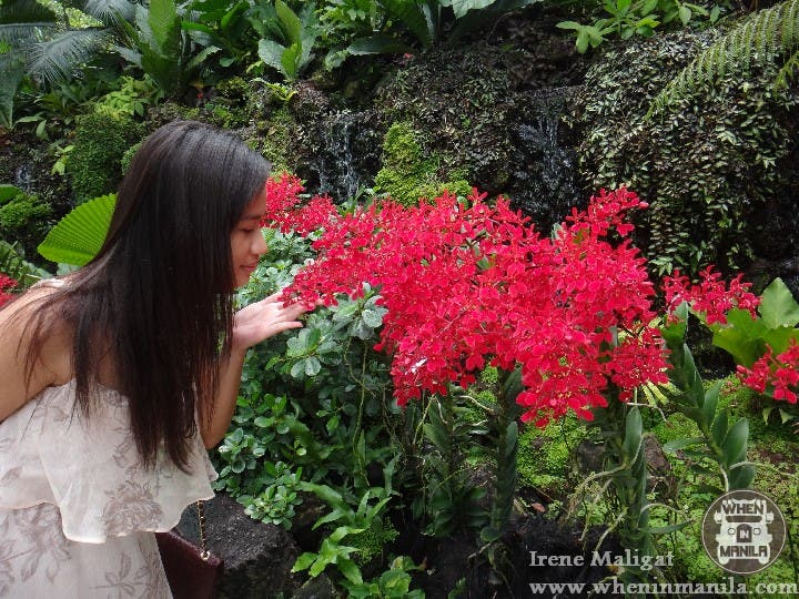 The National Orchid Garden SG (9)