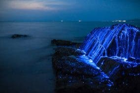 Magical Photos of Rare Sea Fireflies in Japan