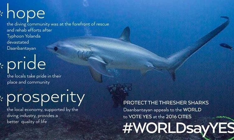 Help Protect the Philippine Thresher Sharks, Sign the Petition Here!