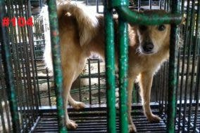 Dogs at Markina City Pound