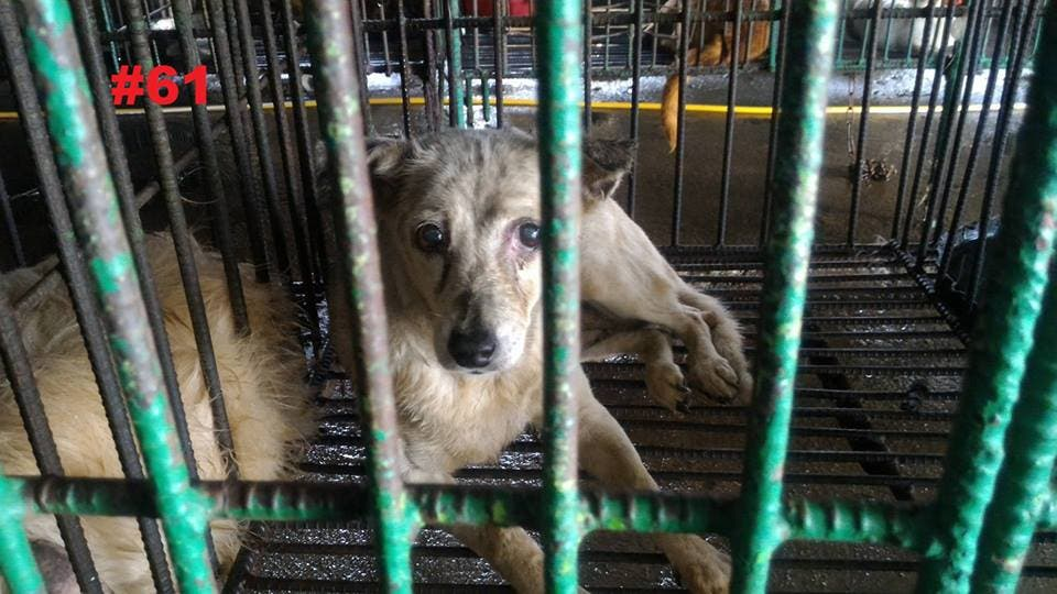 Manila City Dog Pound Number