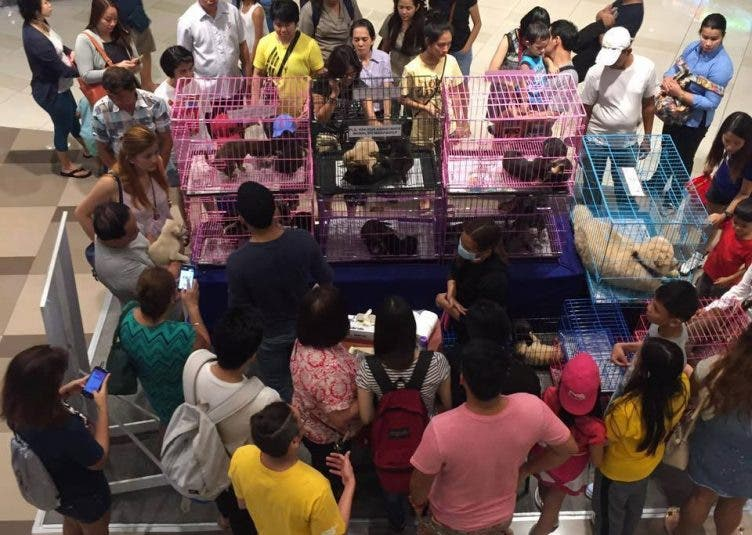 Illegal pet selling at Ayala Fairview Terraces , Quezon City Why you shouldn't buy pets from pet shops