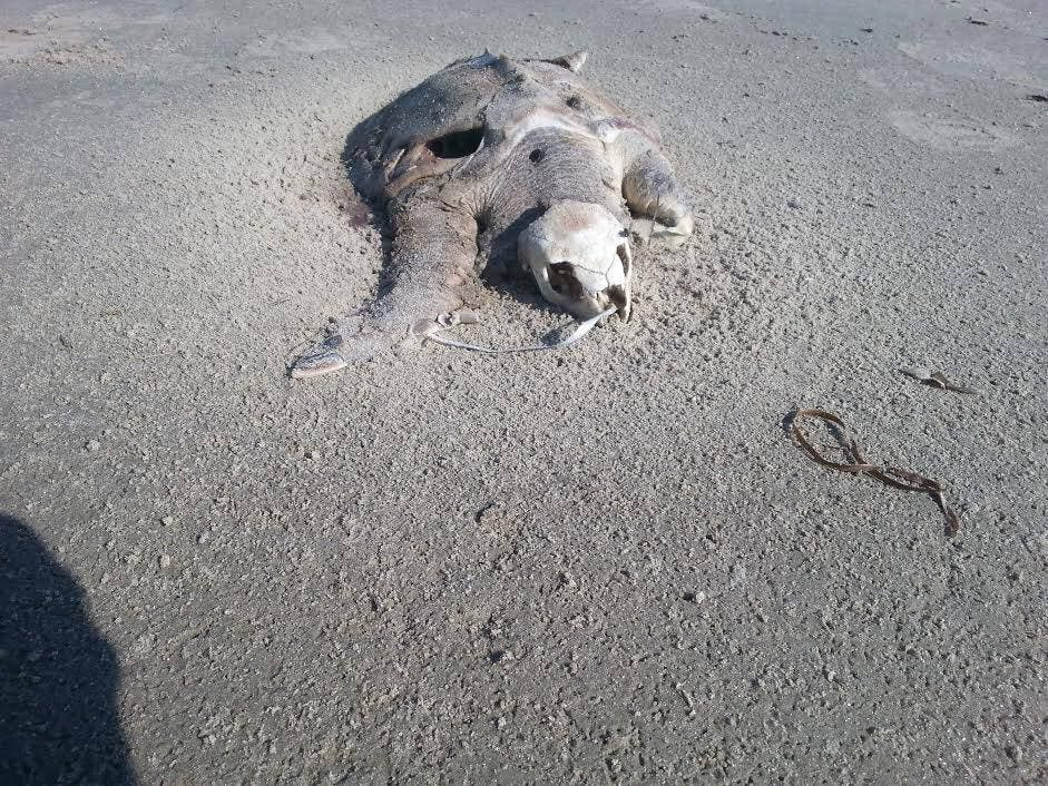 Marine creatures killed by balloons and sky lanterns