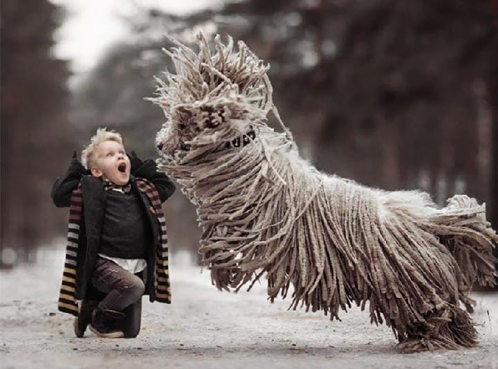 "Giant ""Mop"" Dog Playing in the Snow"