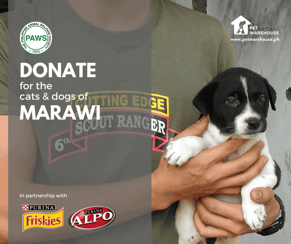 Donate for the Dogs and Cats of Marawi