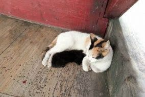 Rescued blind cat with kittens - Jaimee delos Reyes