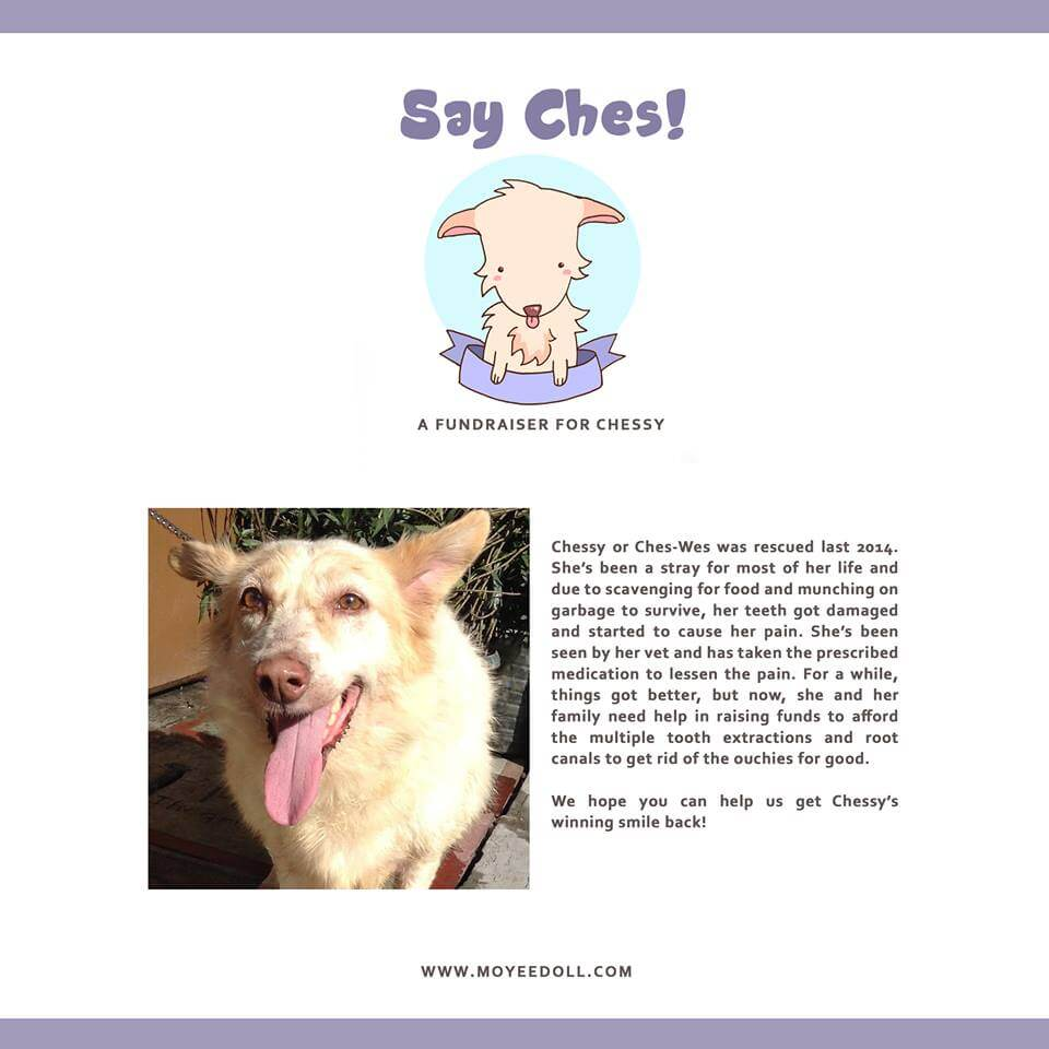 Say Ches Fundraising Drive for the Dental Surgery of a Rescue Dog in the Philippines