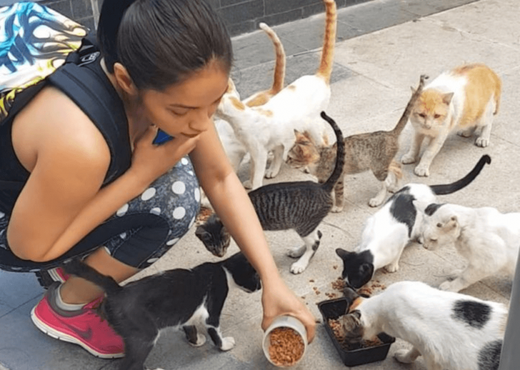 Sheila Snow Model Animal Lover and the cats of BGC