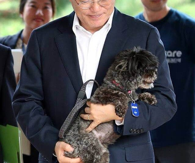 South Korea President Adopts a Rescued Dog