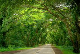 Acacia Tunnel in Palawan by Travel in Palawan