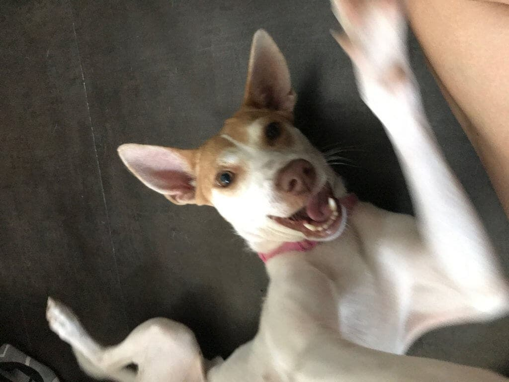 HELP MAS DOGS Maddie rescued dog