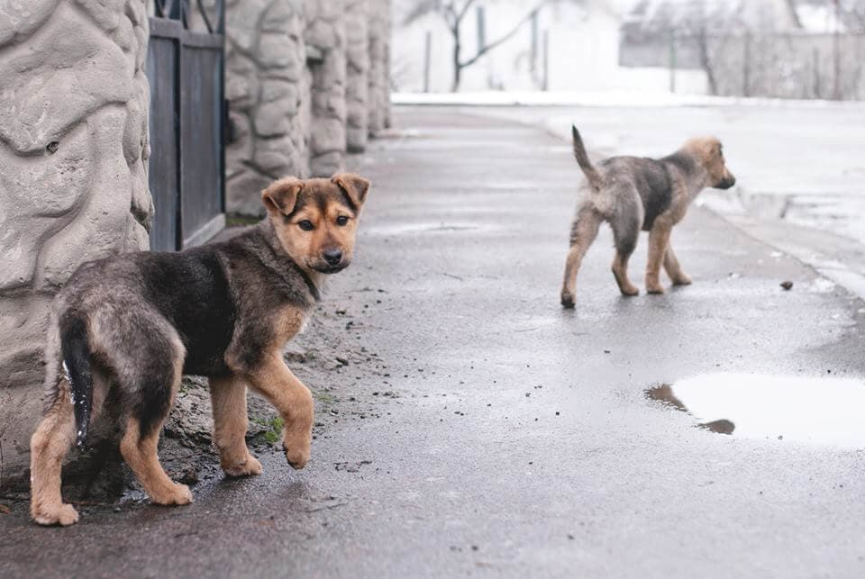 Stray dog are constantly in danger of getting sick, injured, or killed on the streets.