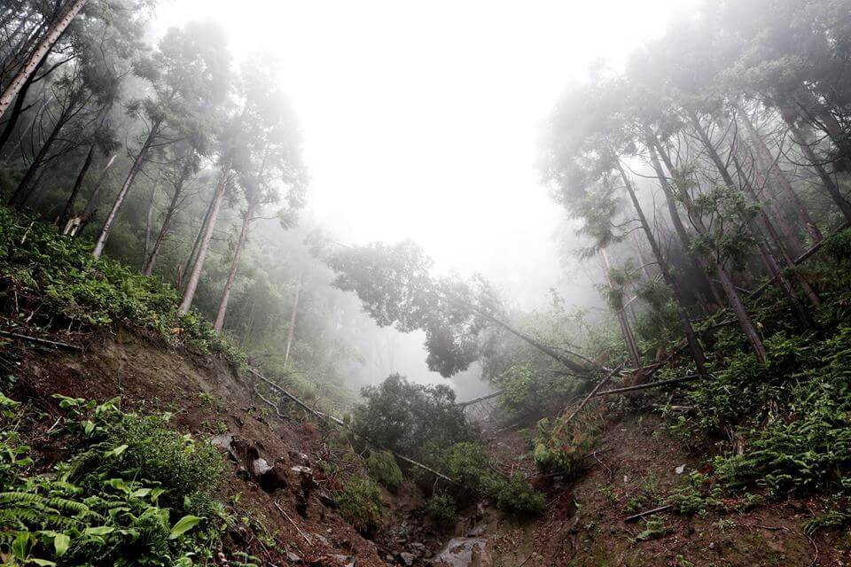 Tropical Forest Emit More Carbon than they soak up