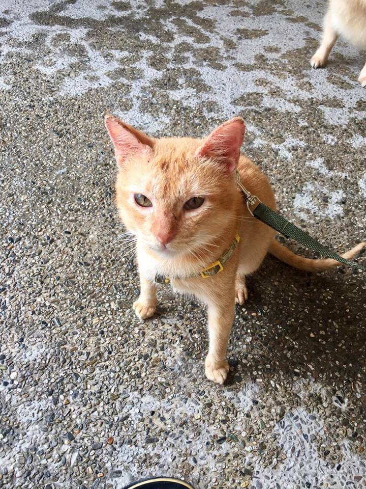 Rescued Cat Story - Ginger and the Poms by Liza Fielder