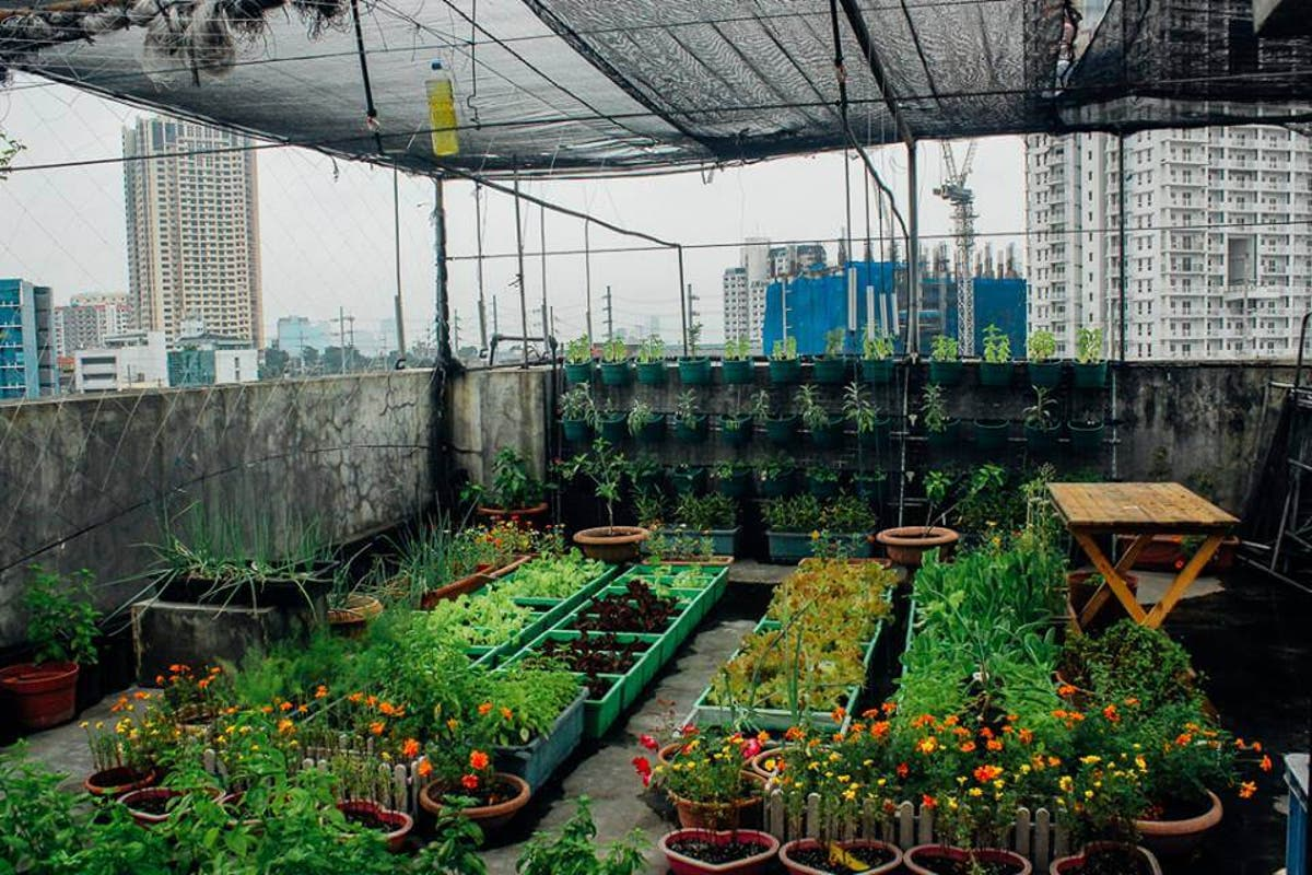 Want To Grow Food In Your Home Here S How To Start When In