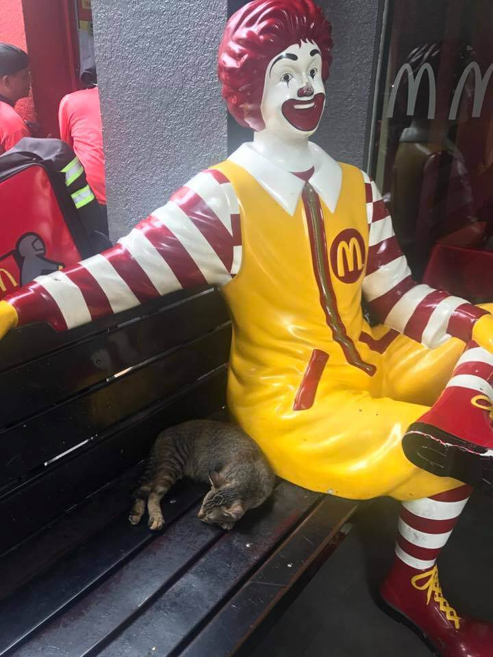 Cats-of-BGC-and-McDonalds