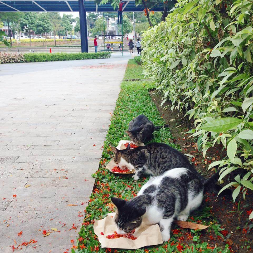 Cats of BGC survives another day