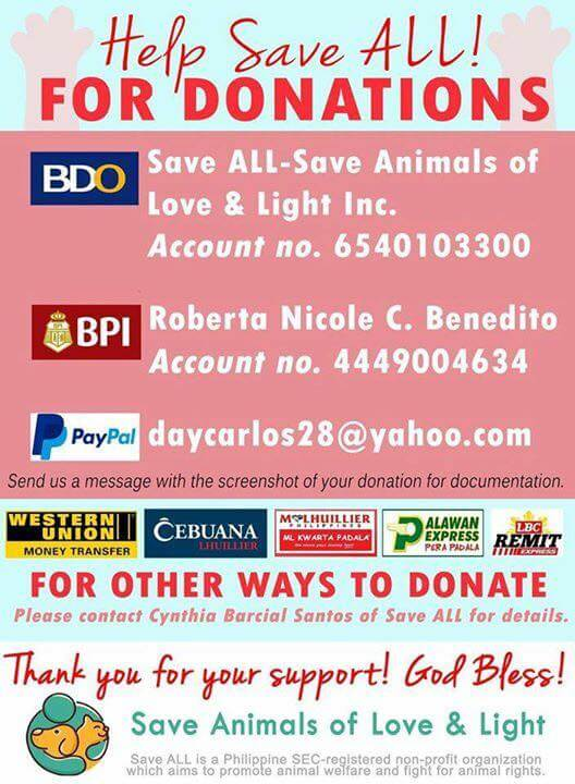 How-do-Donate-to-Save-All-animal-rescue-group-in-the-Philippines