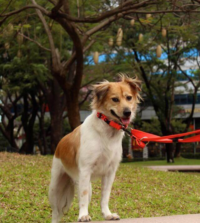 Walker-a-hopeless-and-mangy-mutt-is-transformed-by-TLC-at-the-park